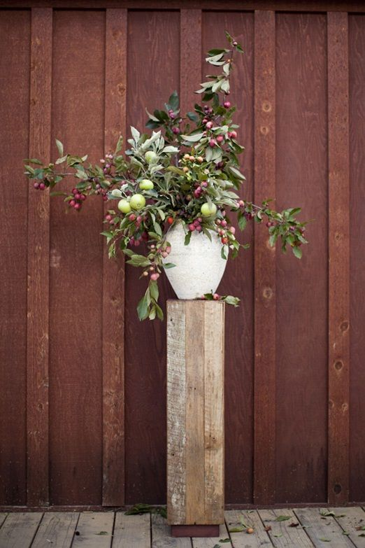apple tree branchesusing orchard fruit branches |