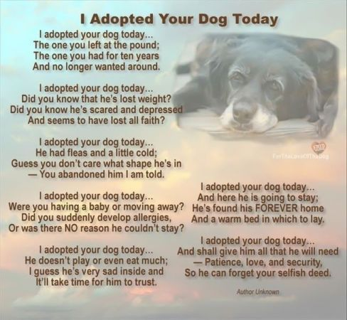 I Adopted Your Dog Today I Ll Never Know Why Old Man Was Left Unclaimed At A Kill Shelter But He S Definitely Got A Forever Hom Dogs Rescue Dogs I Love Dogs