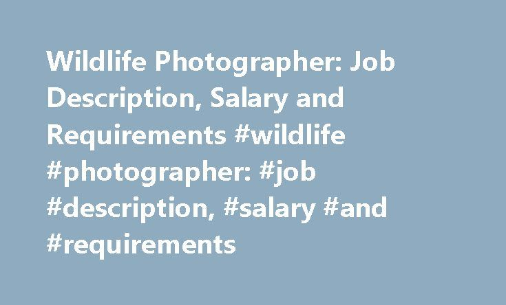 Wildlife Photographer Job Description, Salary and Requirements - photographer job description
