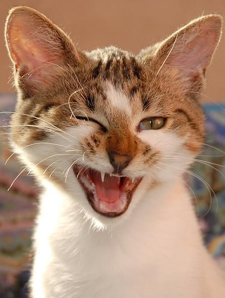 these 10 cats are more awesome than yours cats a winking