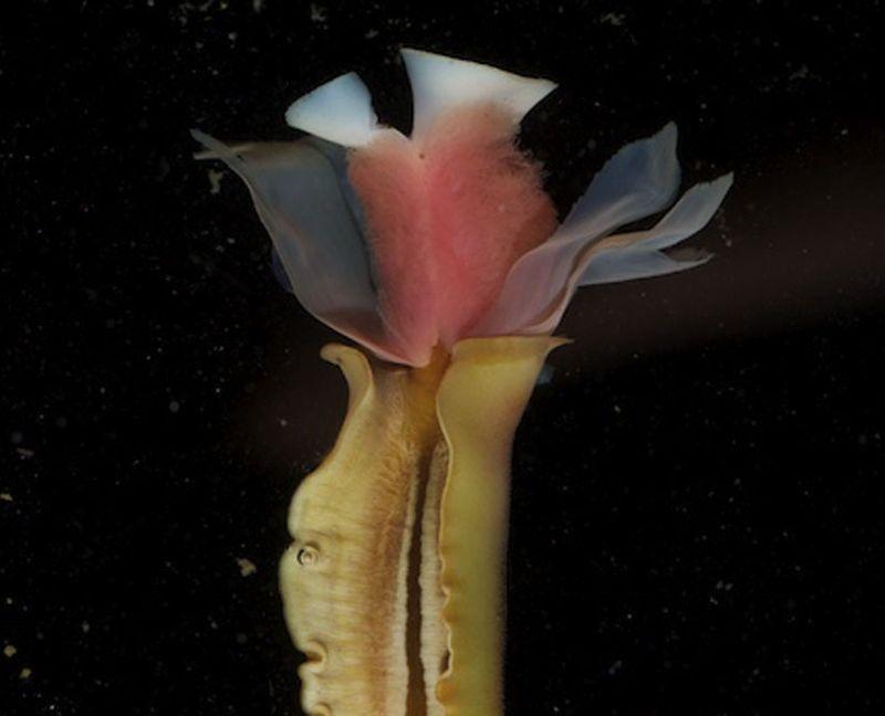 Caudata Culture Articles - Aquarium Invaders: Photographs