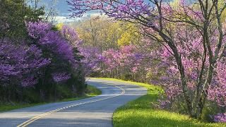 Morganton Nc 10 Day Weather Forecast The Weather Channel Weather Com Beautiful Roads Blue Ridge Parkway Road Trip Usa