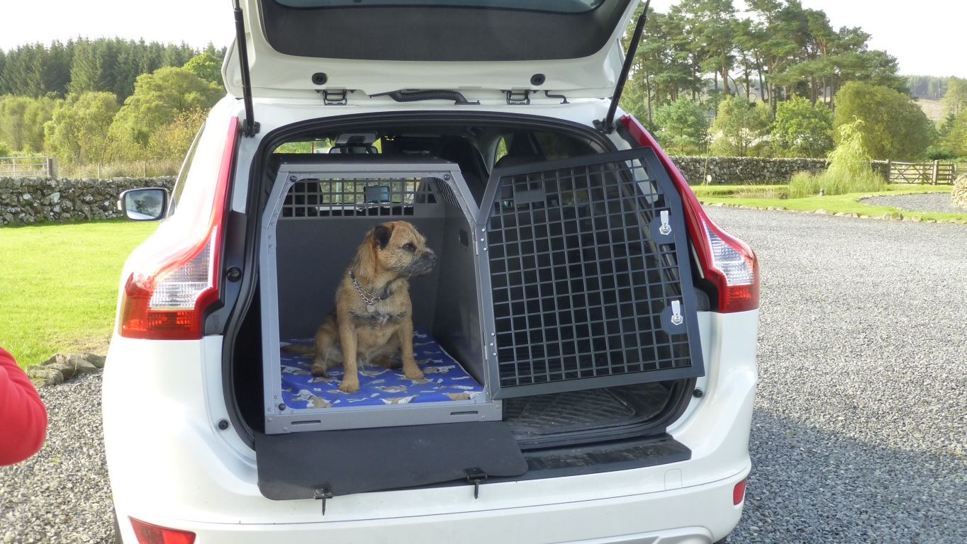 2015 Model Transk9 B23 In Volvo Xc60 With Ted The Border Terrier