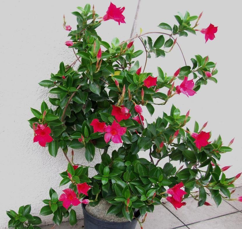 Plantas Del Clima Tropical