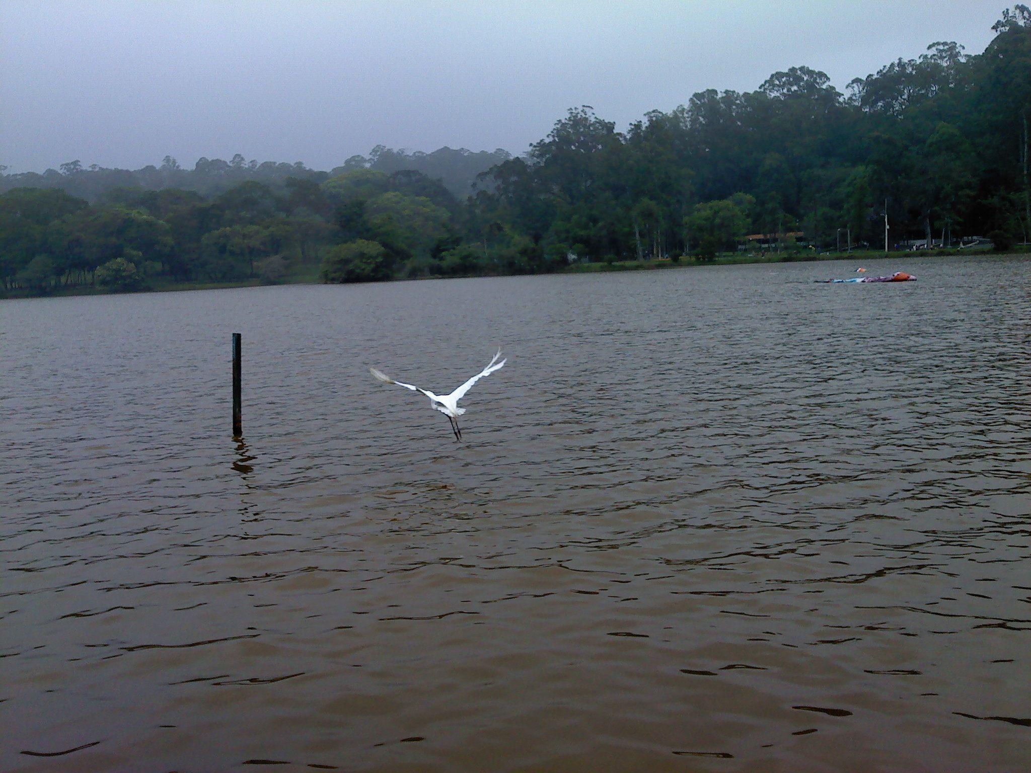 Lago do Parque do Carmo  São Paulo-SP Brasil