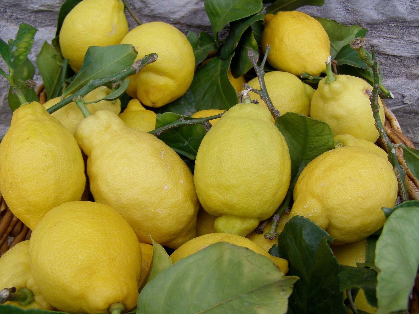 La Tavola Marche: Homemade Limoncello - A Refreshing Buzz