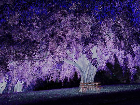 Violet tree and magic circle of light by Igor Makunin