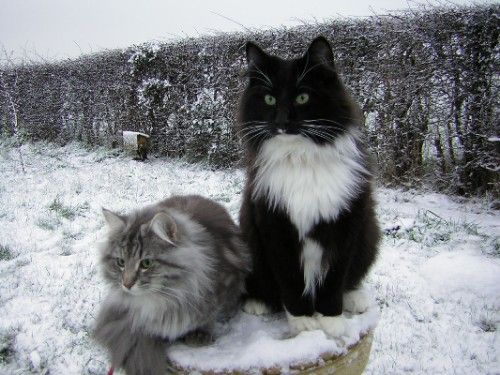 Cat Lovers What S Your Favorite Cat Breed Archive The