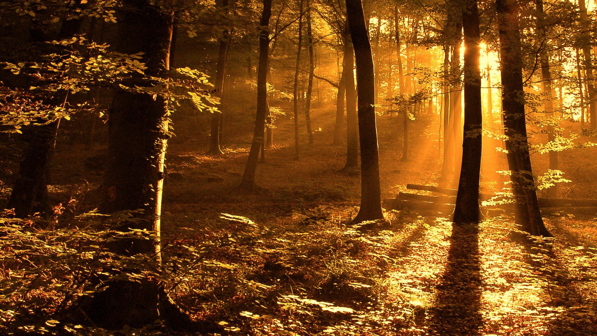 nature forest woods - photo #40
