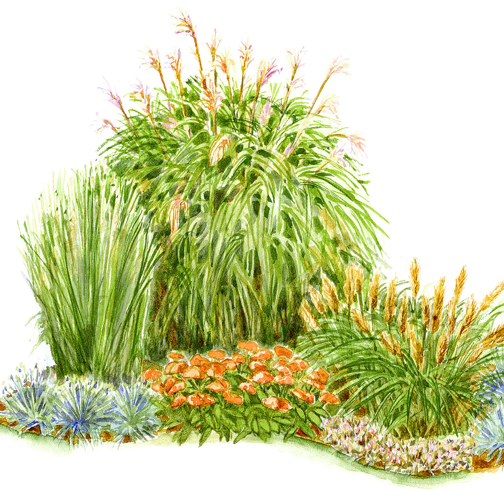 Corner Garden Bed Ornamental Grass Google Search Ornamental Grass Landscape Garden Planning Small Garden Plans