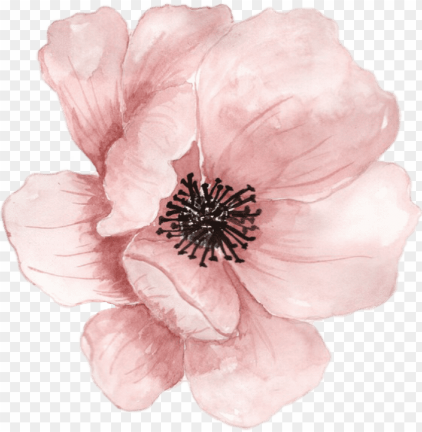 Flower Flowers Watercolor Pink Pastel Ftestickers Transparent Watercolor Flower Png Image With Transparent Background Png Free Png Images Flower Png Images Watercolor Flowers Paintings Free Watercolor Flowers