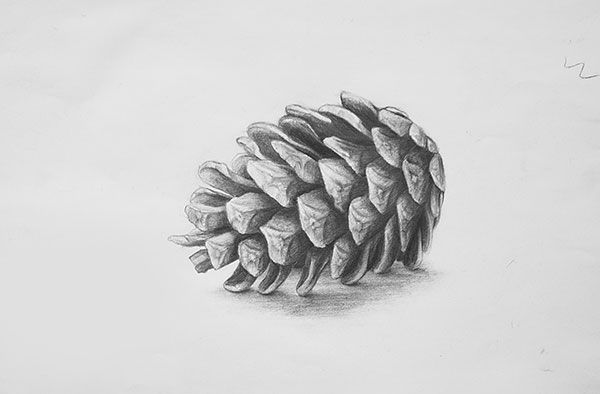 Karakalem Cizimleri Yaprak En Yeniler En Iyiler Summer Art Projects Pine Cone Drawing Realistic Art