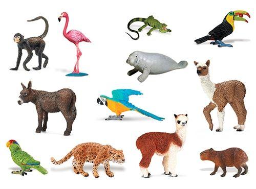 Animals of South America | Spanish Animales | Pinterest