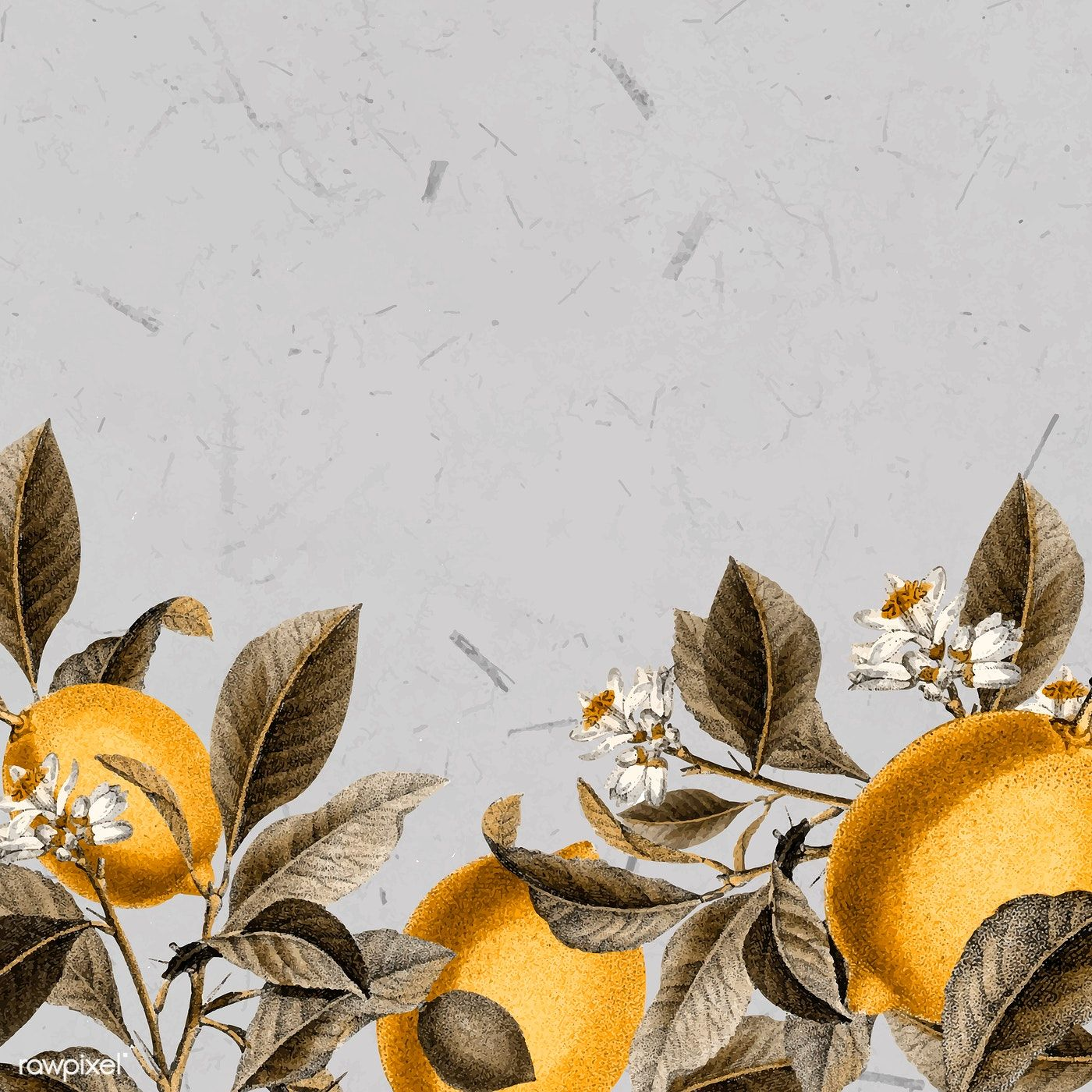 Download Premium Vector Of Tropical Lemon On A Gray Background Vector