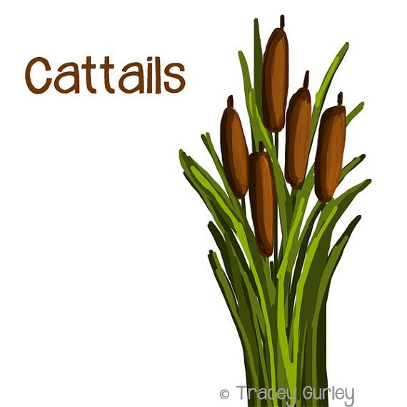 cattails graphic original art cattails clip art cattails digital rh pinterest com au cattails clip art realistic