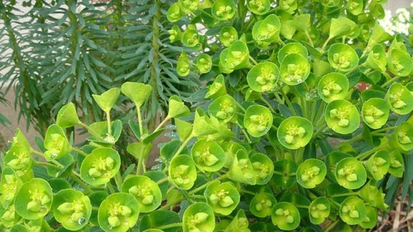10 garden plants even you can't kill Herb garden pots