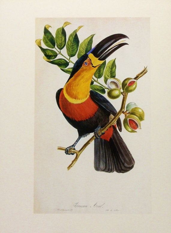 Toucan Parrot Print Tropical Bird Decor Great Painters Art Wall Hanging No 97