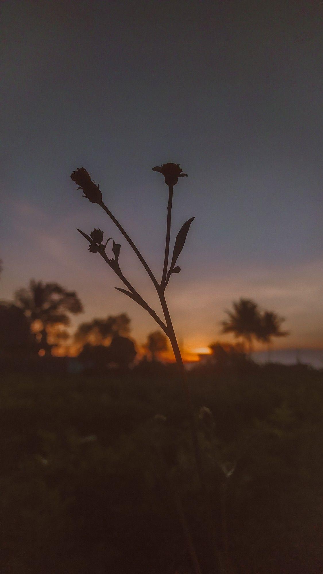 Sunrise Fotografi Alam Pemandangan Pemandangan Abstrak