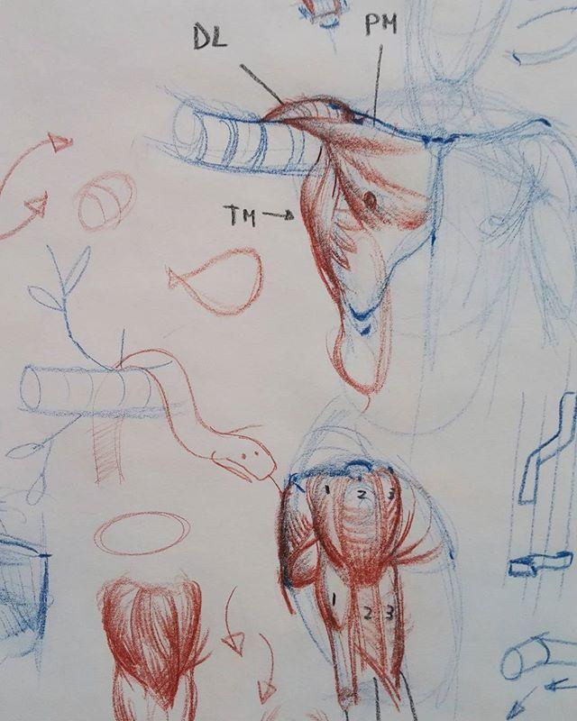 Arm snakes #art #figure #drawing #anatomy #anatomydrawing #sketching ...