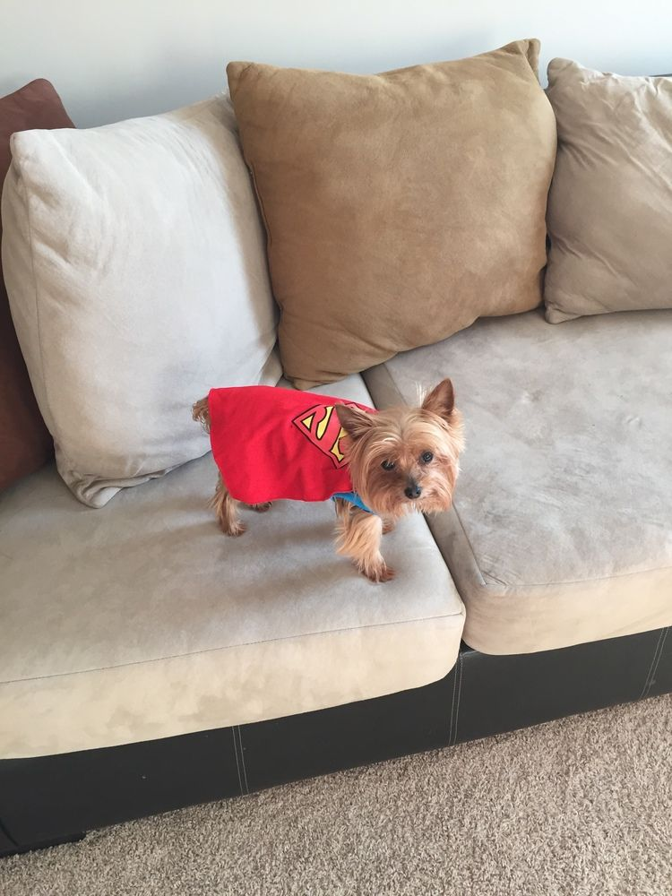 I just voted for my pet in the Pet Supplies Plus Howl-o-Ween Photo Contest! You should, too! Just click this link, then scroll down a little bit until you see my pet. He or she will be first in the gallery. Thank you!