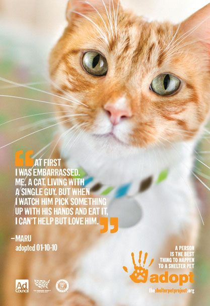 At First I Was Embarrassed The Shelter Pet Project Cat Adoption Animal Projects
