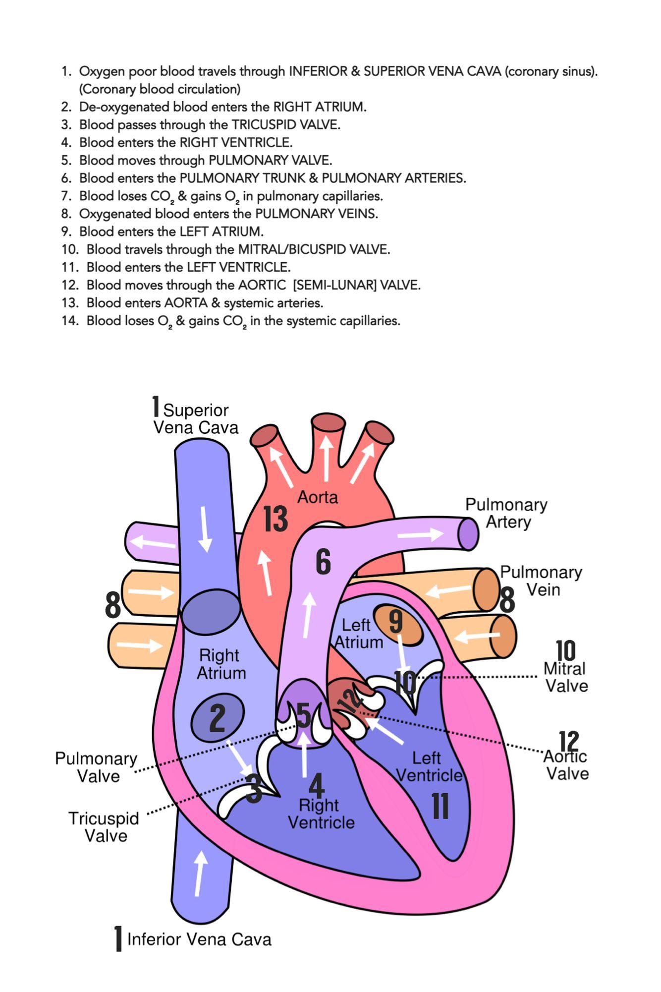 Pin On Nursing Mnemonics