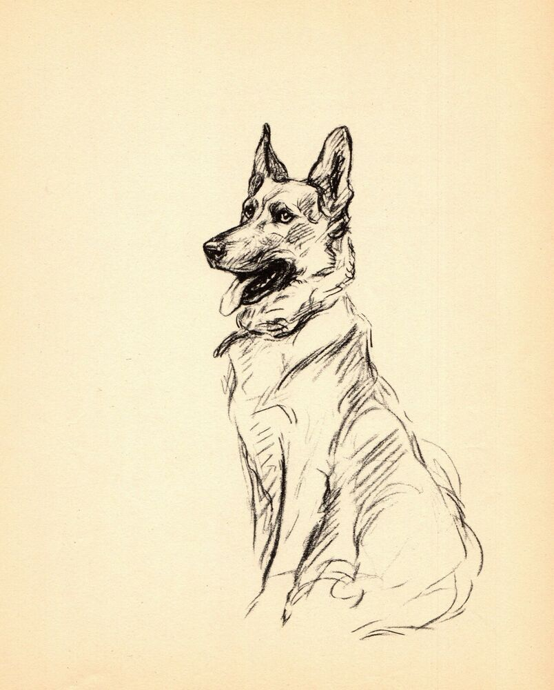 Pin On Vintage Dog Art Decor