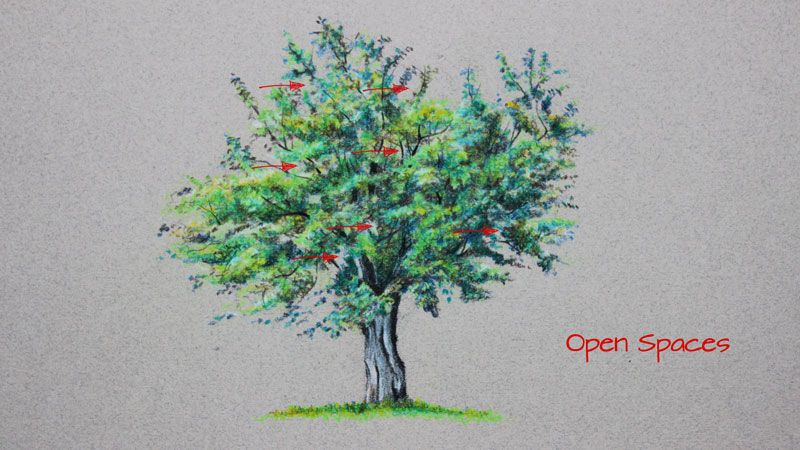 how to draw a tree with polychromos colored pencils drawing