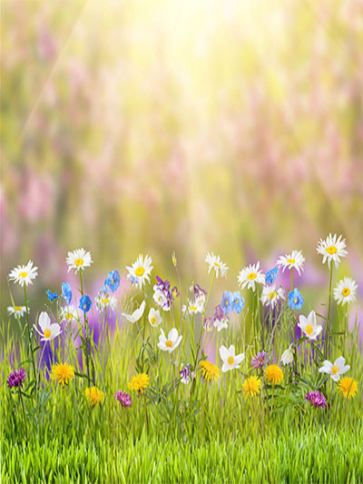 Images of spring nature scenery