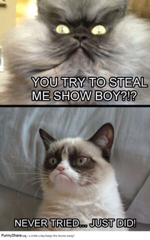 Grumpy cat owns the show