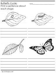 Free Printable Worksheets On The Life Cycle Of A Butterfly With