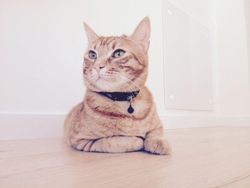 "Cat ""Magic Mike"""