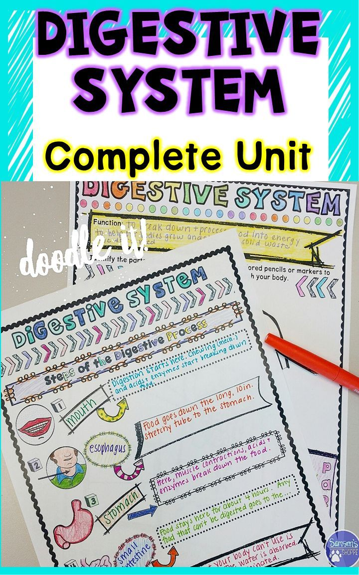Digestive System Unit Activities Digestive system for
