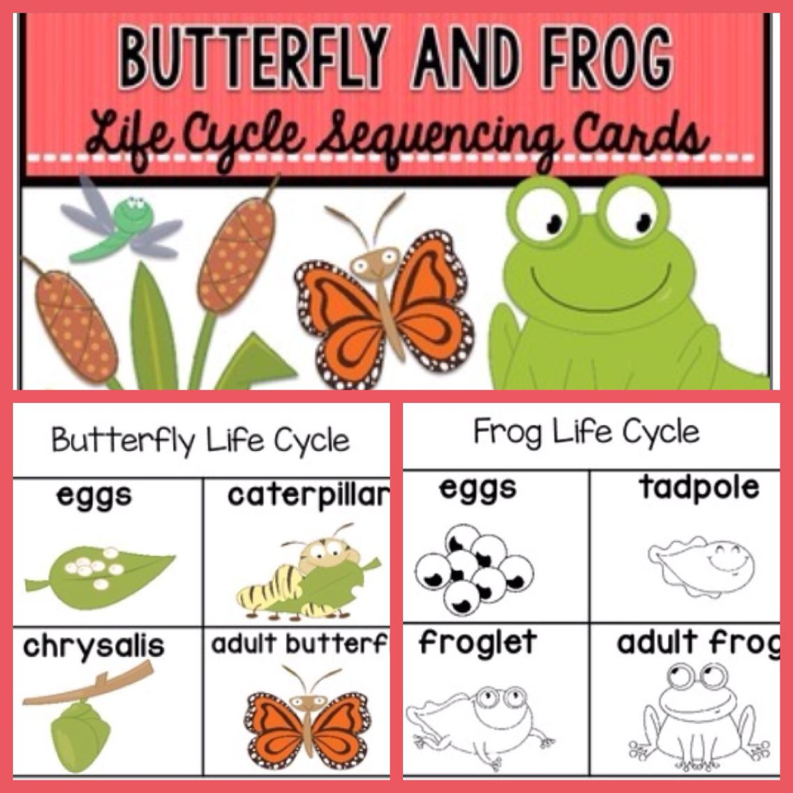 Life Cycle Sequencing Cards Free Butterfly And Frog