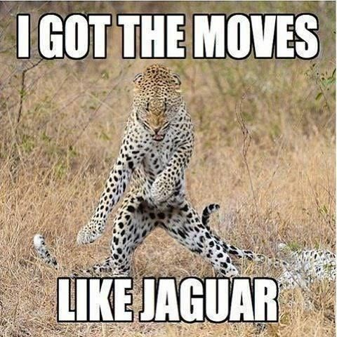 These Animals Love To Dance! (15 Hilarious Memes) #animalcaptions