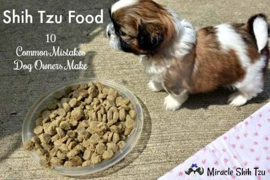 Shih Tzu Food 10 Common Mistakes Dog Owners Make Shih Tzu Dog