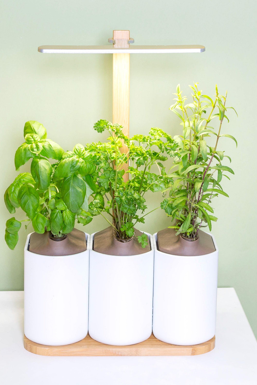 Herbes Aromatiques D Intérieur lilo   jardinage de légumes d'intérieur, potager et jardin