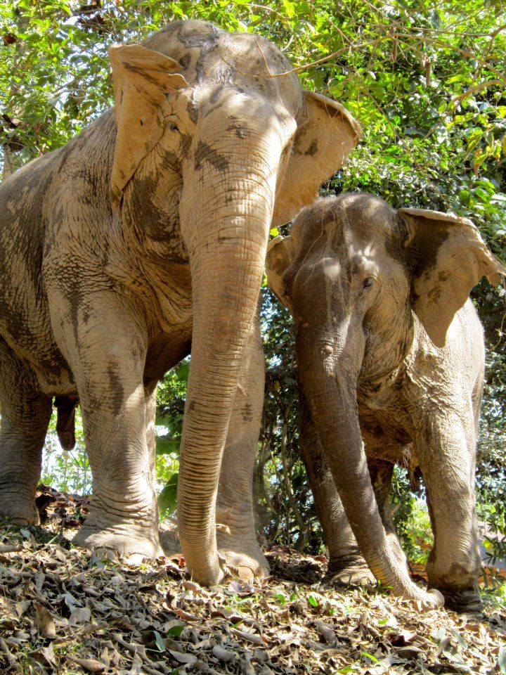 You\'re the BEST OF FRIENDS!!! — at Boon Lott\'s Elephant Santuary ...