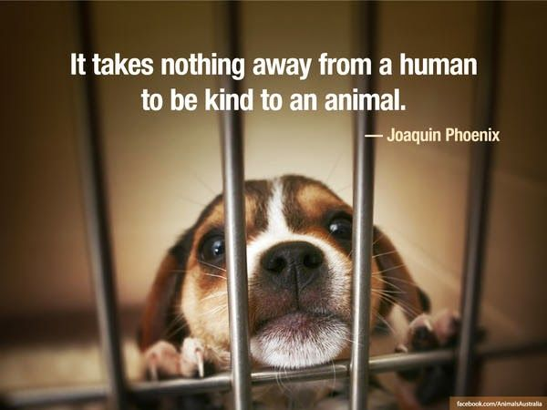 Exactly There Is NO Reason For Animal Abuse Neglect Truths Fascinating Animal Abuse Quotes