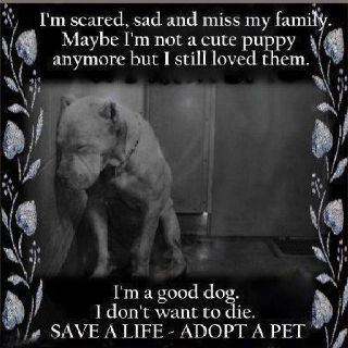Don T Breed Or Buy While Shelter Pets Die Opt To Adopt Dogs Best Dogs I Miss My Family