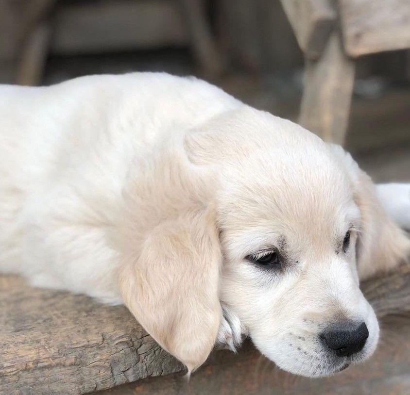 195 Tough Dog Names For Boy Dogs Dog Names Boy Dog Names Tough Dog Names