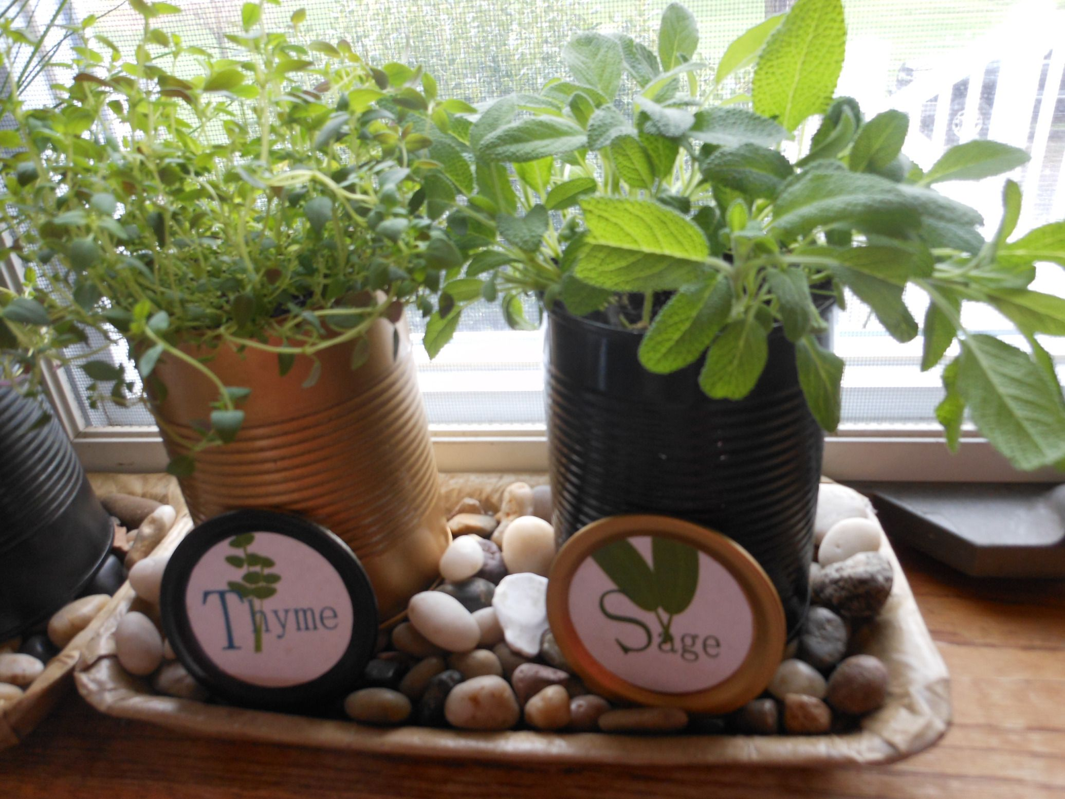 DIY Kitchen Windowsill Herb Garden. Spray Painted Tin Cans, Can Lid Labels.