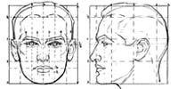 Курсы рисования для начинающих взрослых. Урок. Пропорции лица.