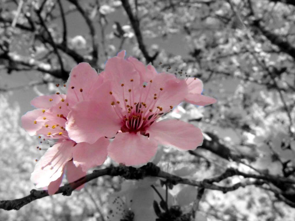 Black White Pink Pop Color Pop Pinterest Black