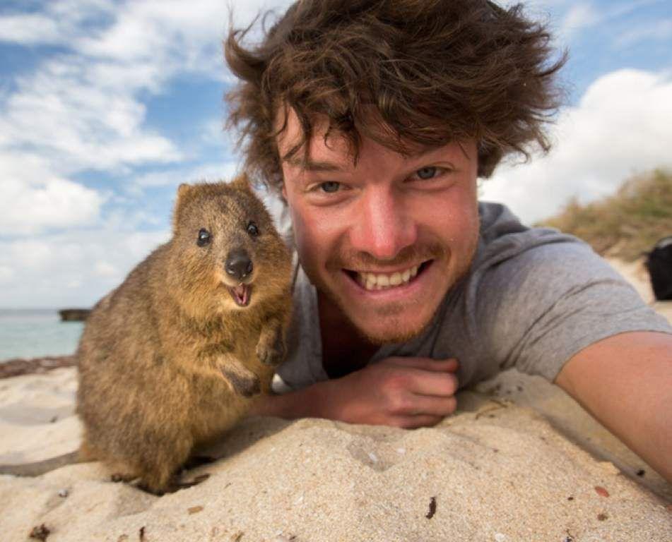 El pequeño animal se ha vuelto el atractivo turístico de su isla.
