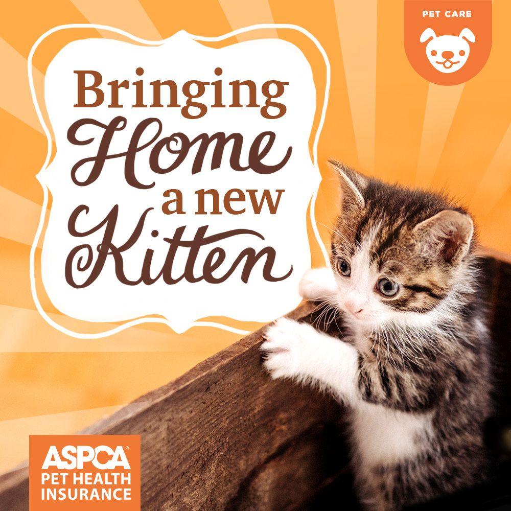 Bringing Home A New Kitten Kitten Care Bringing Home A Kitten Kitten Supplies