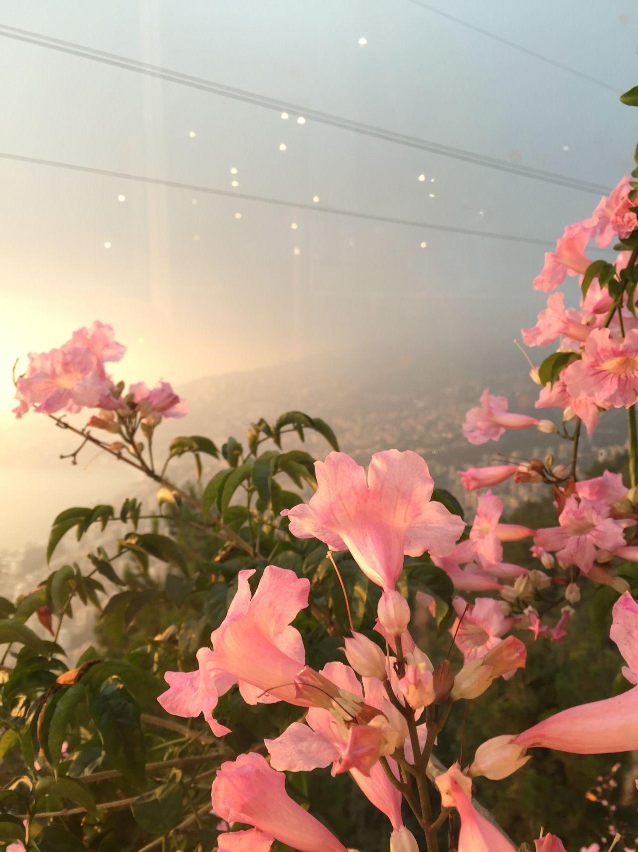 Kawaii Shop Flower aesthetic, Plants