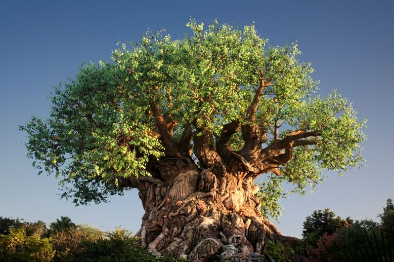 дерево життя фото знаем рецепт