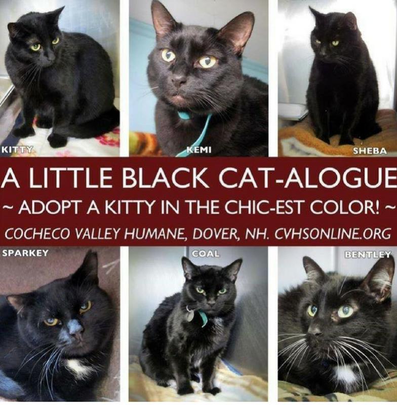 8 Ways To Promote Black Cats Aspcapro Cat Adoption Black Cat Adoption Cat Shelter