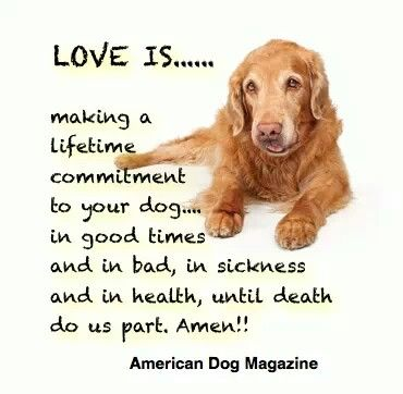 Pin By Ellen On Pet Sayings Dog Quotes Dogs American Dog